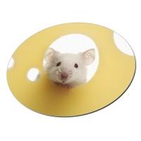 Ovales Mousepad